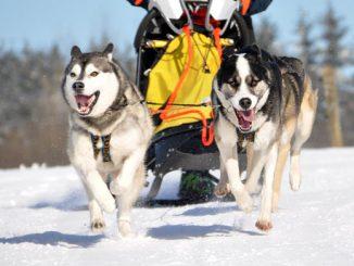 Wandern mit Schlittenhunden