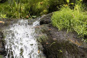 Moosbewuchs an Steinen ist auch ein Indikator für die Trinkbarkeit