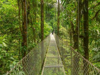 Regenwald Outdoor