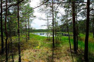Trekking Estland