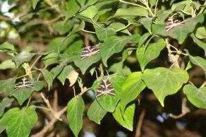 Das Schmetterlingstal auf Rhodos
