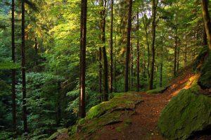 Thüringer Wald- Trekking in Deutschland