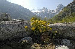 Der Trek zum Vanois Gletscher erfordert eine gute Kondition