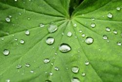 Bei Kleidung mit mikropoösen Membran perlt das Wasser ab