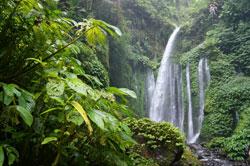 Ein besonderes Highlight im Regenwald sind die zahlreichen Wasserfälle