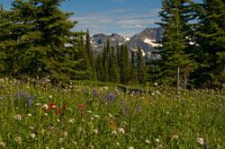 Ein besonderes Panorama bietet die Wildblumenwiese im Sommer